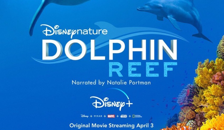 Dolphin Reef Releases on Disney + Today